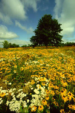 prairie_flowers_by_roger_hill.jpg